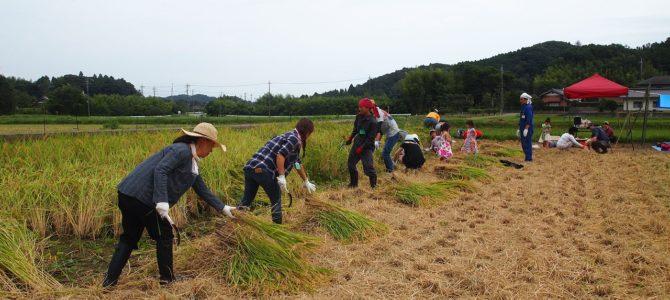 結農園×星空スペース お米の収穫!みんなで稲刈り!開催しました。