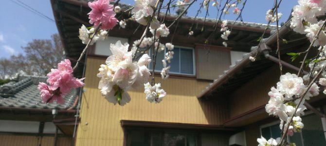 4/7(日)~4/10(火)今週のメニュー