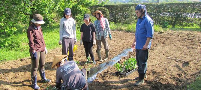 畑コワーキング~夏野菜植え始めました