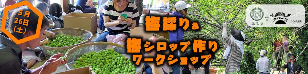 【5/26(土)】結農園x星空スペース 梅採り&梅シロップ作りワークショップ