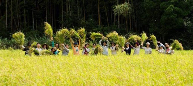 【9/15・9/16】稲刈りしたい人へおすすめ。みんなで稲刈り2018@いすみ市 ブラウンズフィールド