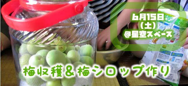 【6/15(土)】梅収穫&梅シロップ作りワークショップ@星空スペース