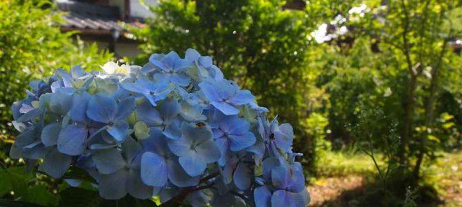 <7/13(土)~7/16(火)>今週の営業情報